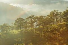 Forêt de pin dans le Lat du DA Photographie stock libre de droits