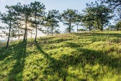 Forêt de pin dans le Lat du DA Image libre de droits