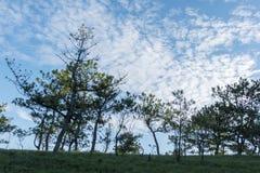 Forêt de pin dans le Lat du DA Photos stock