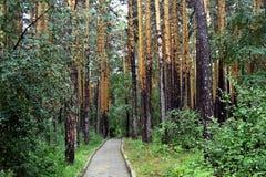 Forêt de pin de Borovoe, Kazakhstan Photographie stock libre de droits