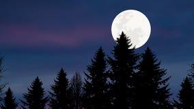 Forêt de pin de clair de lune Images libres de droits
