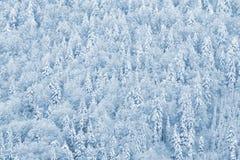 Forêt de pin de l'hiver Photo libre de droits