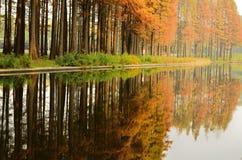Forêt de pin et image reflétée colorée image stock