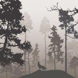 Forêt de pin et le loup illustration de vecteur