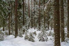 Forêt de pin et de sapin dans l'horaire d'hiver avec une couche épaisse de neige photos libres de droits