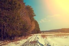 Forêt de pin le long de route dans le jour ensoleillé photographie stock