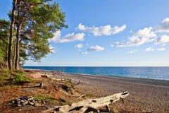 Forêt de pin par la mer bleue dans le Colchis légendaire L'Abkhazie images libres de droits