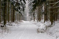 Forêt de pin pendant l'hiver Image libre de droits