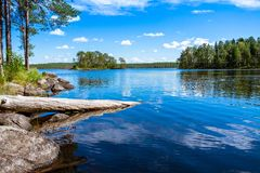 Forêt de pin près du lac Photos stock