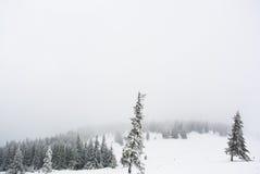 Forêt de pin sous la neige image stock