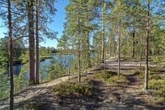 Forêt de pin sur la berge Image stock