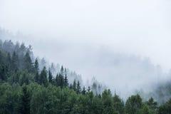 Forêt de pin sur la montagne en brouillard photo libre de droits