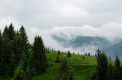Forêt de pin sur le dessus de montagne Photographie stock libre de droits