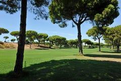 Forêt de pin, terrain de golf d'EL Rompido, Andalousie, Espagne Image stock