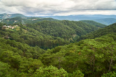 Forêt de pin - vue courbe - du funiculaire de Dalat à la pagoda de fuite de Truc Dalat, Vietnam Avec l'espace de copie images stock