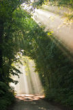 Forêt de regain Photos libres de droits