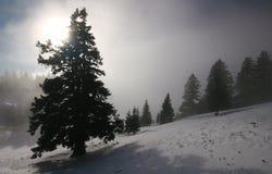 forêt de regain Photographie stock