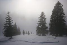 forêt de regain Photos stock