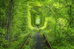 Forêt de ressort autour de tunnel de manière de rail Image stock