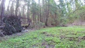 Forêt de ressort avec un coupe-vent clips vidéos