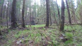 Forêt de ressort avec un coupe-vent banque de vidéos