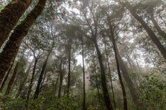 Forêt de ressort en brouillard Images stock