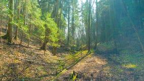 Forêt de ressort et soleil, temps-faute d'inclinaison banque de vidéos