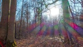 Forêt de ressort et soleil, temps-faute de l'inclinaison 4K banque de vidéos