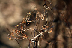Forêt de ressort sans des feuilles Images libres de droits