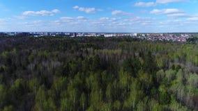 Forêt de ressort sous un ciel bleu banque de vidéos