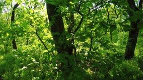 Forêt de ressort sur la nature banque de vidéos