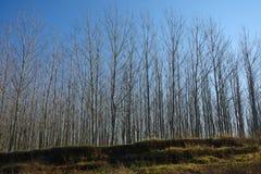 Forêt de rive photos libres de droits