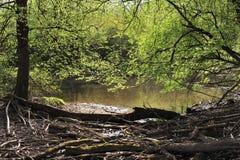Forêt de rive Photo stock