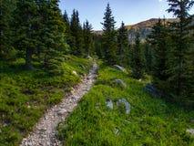 Forêt de Rocky Mountain Trail Through Pine photos libres de droits