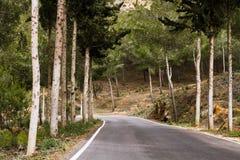 Forêt de route de montagne Photos libres de droits