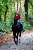 Forêt de ruelle d'avenue de cheval d'étalon de noir d'équitation de femme photographie stock