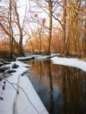 forêt de ruisseau images stock