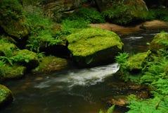 forêt de ruisseau Photos libres de droits