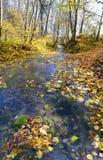 forêt de ruisseau d'automne Photo libre de droits