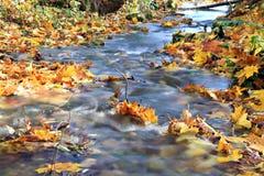forêt de ruisseau d'automne Photos stock