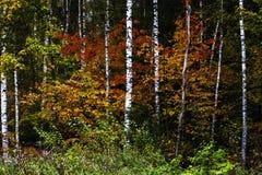 Forêt de Russe d'automne images stock