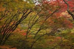 Forêt de saison d'automne Image stock