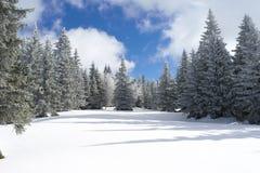 Forêt de sapin d'hiver Image libre de droits