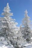 Forêt de sapin d'hiver Images libres de droits