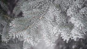 Forêt de sapin d'hiver avec les arbres de Noël neigeux La neige a couvert des sapins un jour d'hiver Fond de l'hiver La neige vie banque de vidéos
