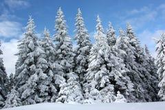 Forêt de sapin de l'hiver images stock