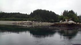 Forêt de sapin et de pins sur la côte rocheuse de fond de l'océan pacifique en Alaska clips vidéos