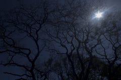 forêt de scène de nuit Photos stock