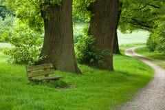 forêt de sentier piéton Images stock