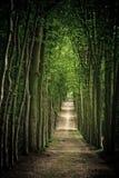 forêt de sentier piéton Image libre de droits